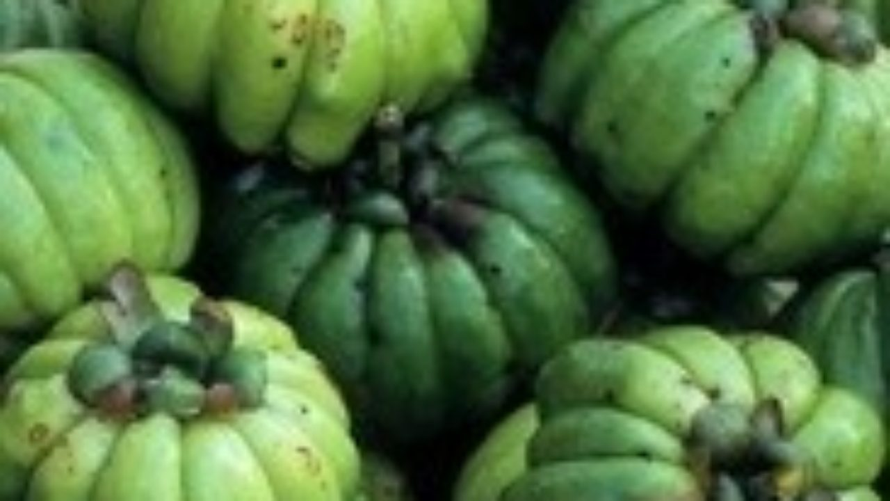 Garcinia Cambogia Holistic Wellness The Inner Source Network